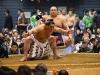 横綱日馬富士は不知火型です。